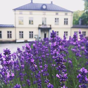 Julbord på Riddersviks Gård i HÄSSELBY | Konferensföretag.se